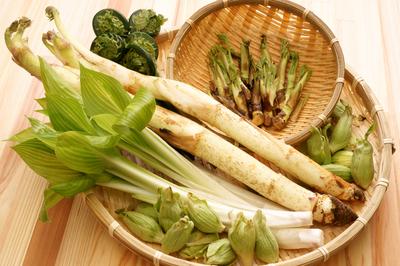 山菜画像.jpg